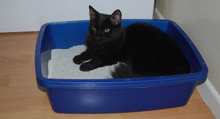 cat on litterbox