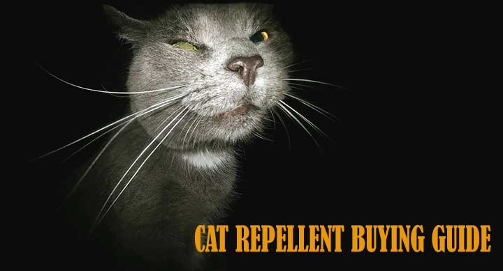 Best Cat Repellent Spray To Buy In 2017 [With a DIY Video]