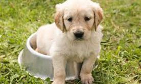 potty training for dog