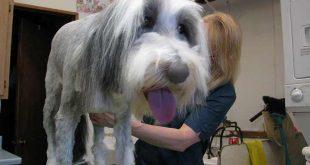 white dog treatment