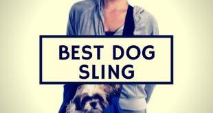 best dog sling reviews